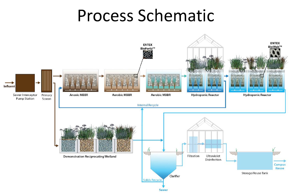 "The process of reclaiming wastewater involves ""adaptive ecological technologies,"" a blend of natural and artificial elements like synthetic root systems and hydroponic gardens. Source: Emory Report, 26 January 2015."